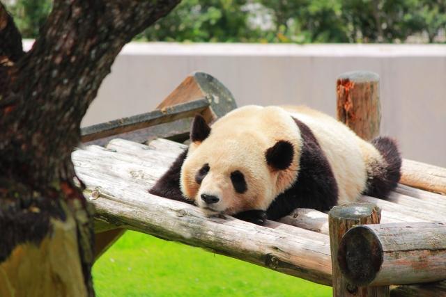 Xビジネスな動物園ランキング